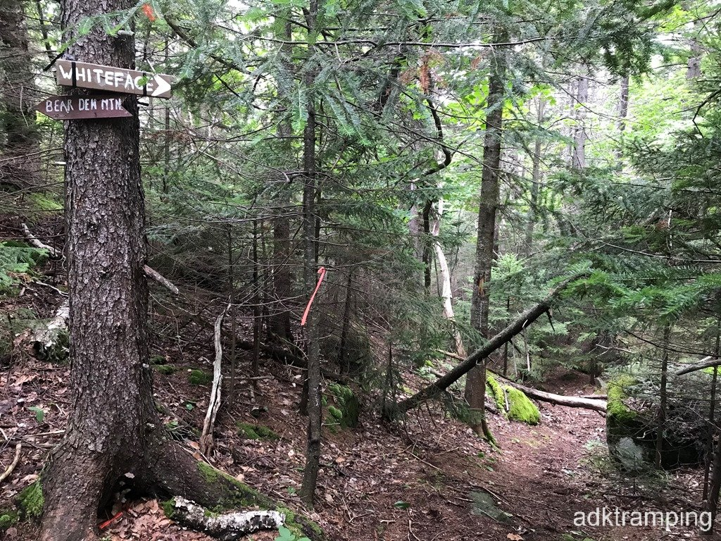 Trail to Whiteface?